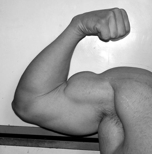 43 cm de tour de bras